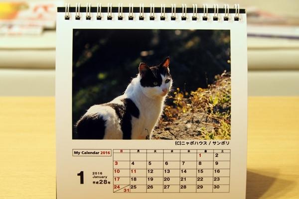 2016年 卓上猫カレンダー 1月