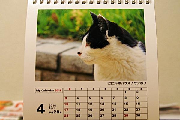 2016年 卓上猫カレンダー 4月