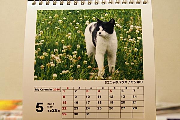 2016年 卓上猫カレンダー 5月