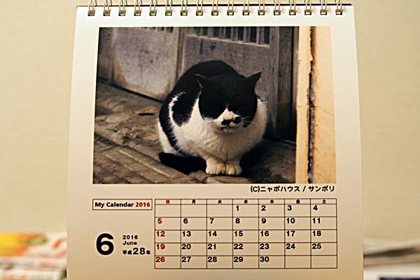 2016年 卓上猫カレンダー 6月