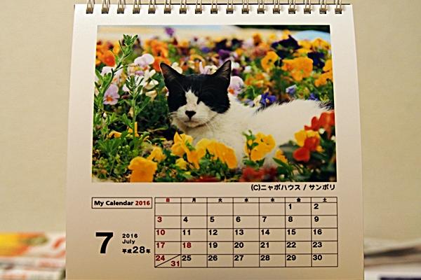 2016年 卓上猫カレンダー 7月