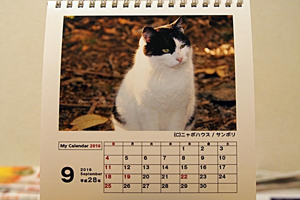 2016年 卓上猫カレンダー 9月