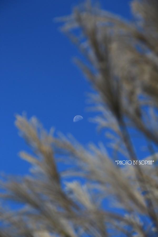 10月4日昼の月