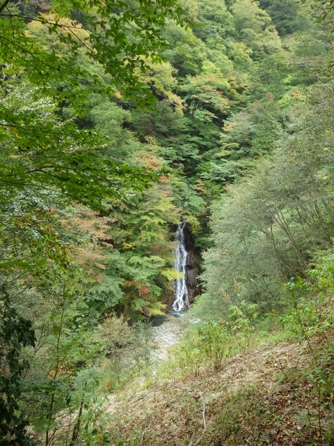 IMGP3124 大久保の滝 (480x640)