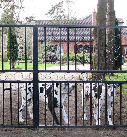 Guard_dogs_at_work_-_geograph_org_uk_-_1203596.jpg