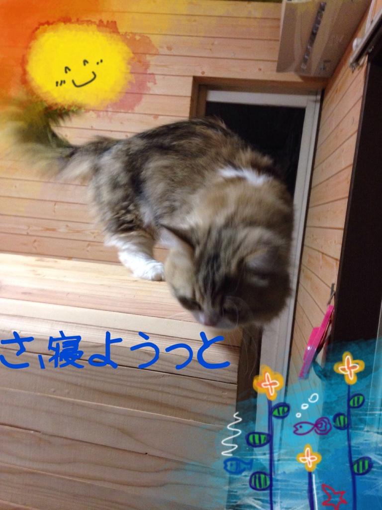 moblog_e4507139.jpg