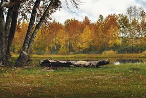 forest-947707_640.jpg