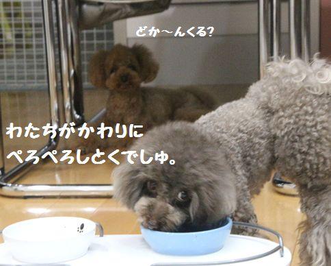IMG_01132.jpg