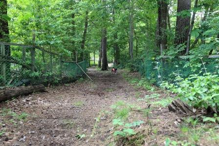 チロルの森32