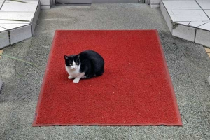 Cat on the mat