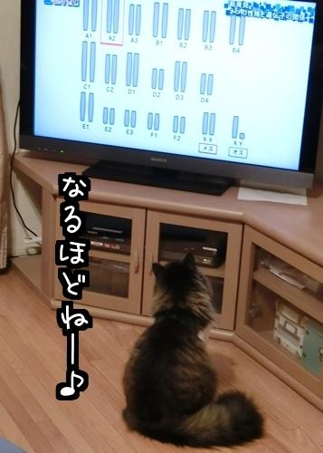 テレビ好き2.
