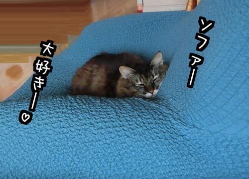 ソファー好き