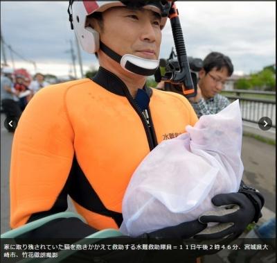 茨城県水害 猫救助01