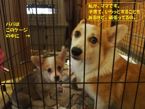 P9050008_convert_20150906223507.jpg