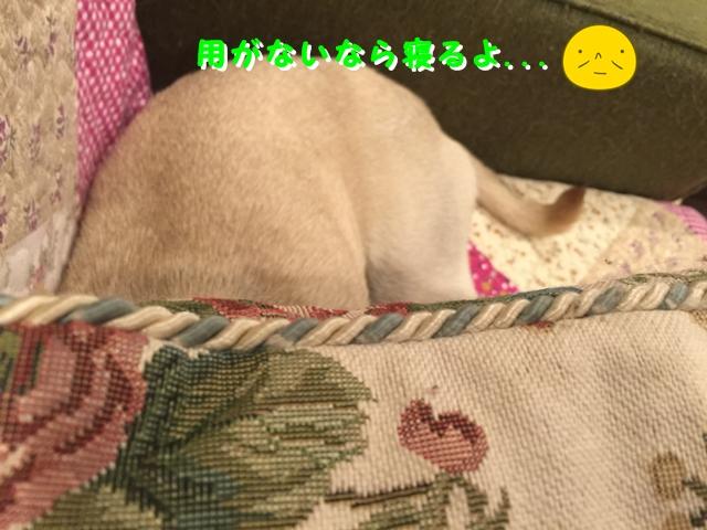 IMG_5656.jpg