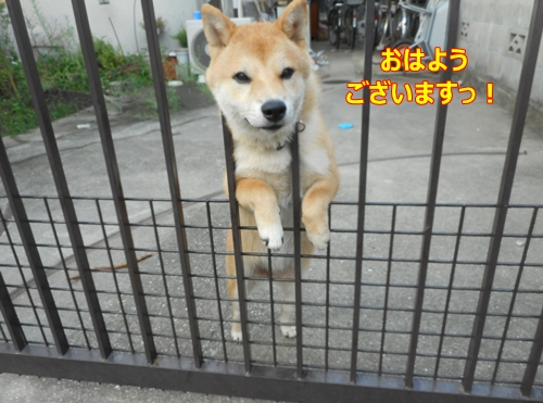 1番犬くん