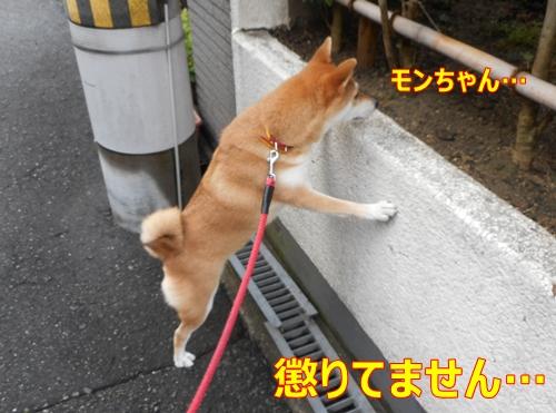 1モンちゃん