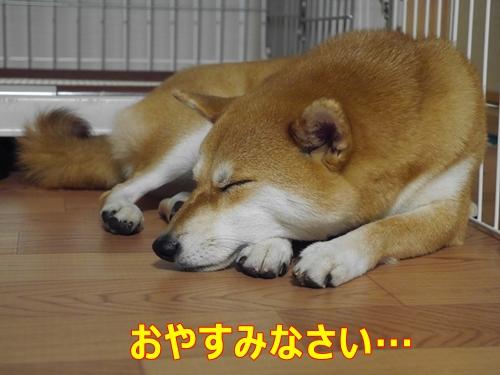 4おやすみ