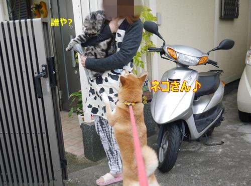 4ネコさん