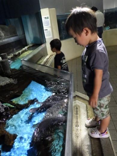かすみがうら水族館 (8)