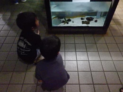 かすみがうら水族館 (9)
