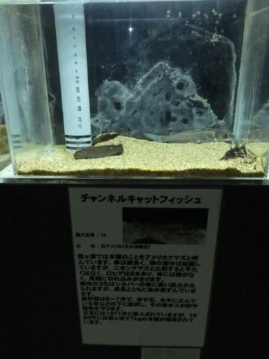 かすみがうら水族館 (10)