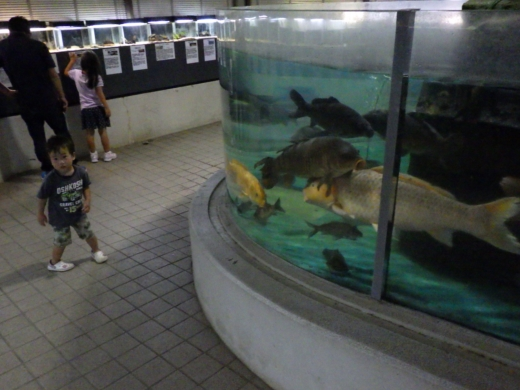 かすみがうら水族館 (12)