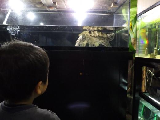 かすみがうら水族館 (17)