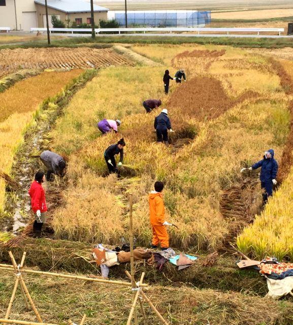 uma-harvesting.jpg