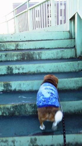 TAROの希望も入れながら,散歩コースを増やしました。