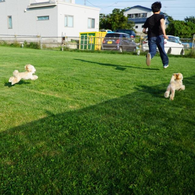 3わん飛行犬