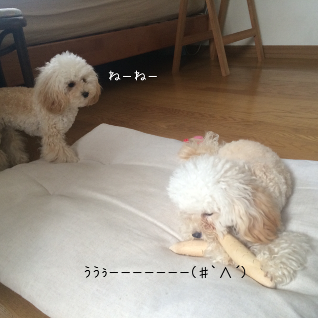 モコはジャイ子なの?5