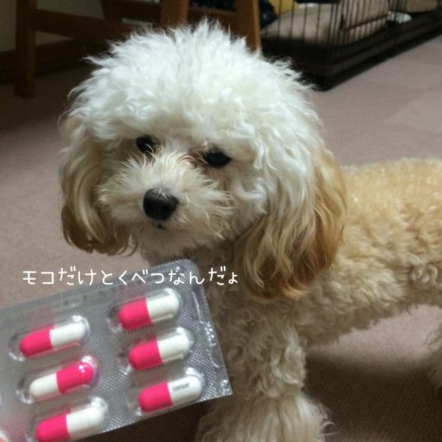 2015.10.19 モコ コセクイン2
