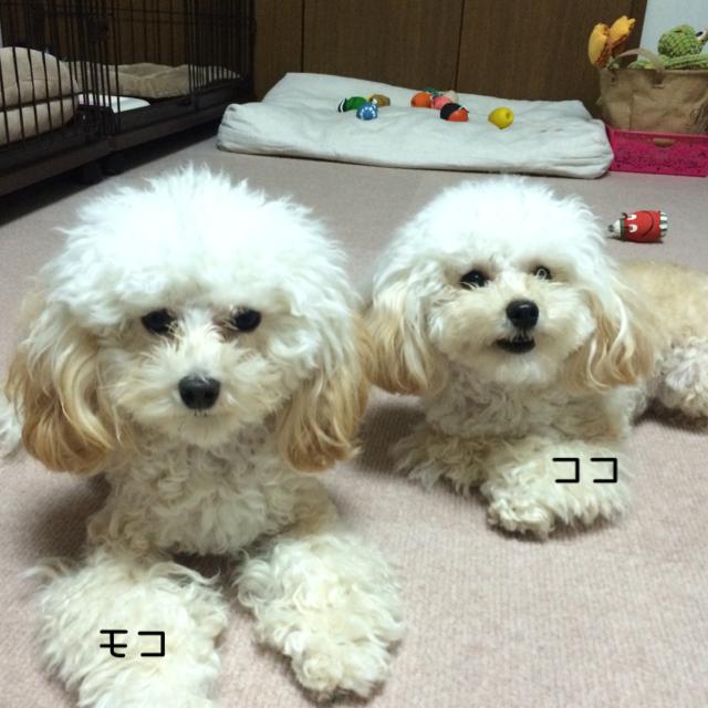 2015.10.20 ココとモコ