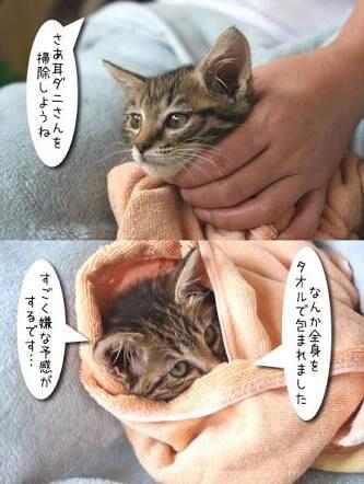 前記事がネガティブ全開だったので、今回は可愛い猫ちゃんの耳かき画像を紹介します。
