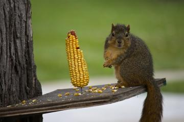 squirrel-522381_640_convert_20150901102835.jpg