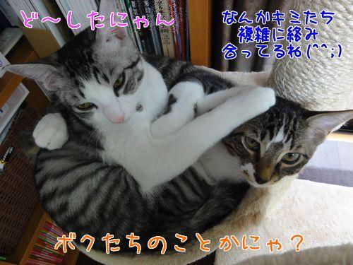 3_WMupEkaO7g1Fy1444826397_1444827042.jpg